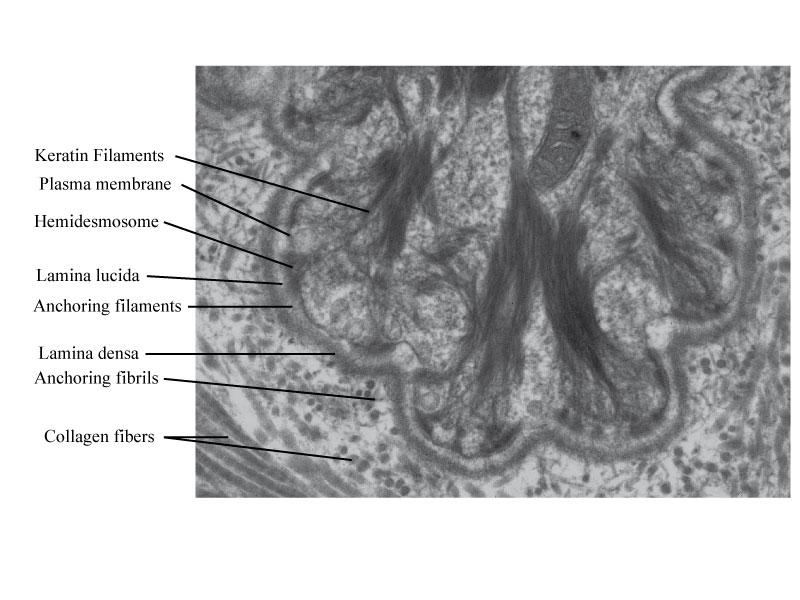 Causes et traitement du prurit (peau qui démange)